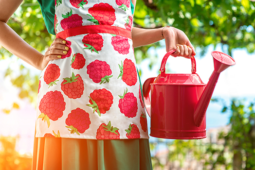 Woman dressed in apron with raspberries holding a pink watering can in the garden